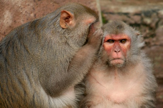 Monkeying around...