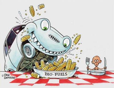 Cheaper Cleaner Biofuel A Temporary Fix To A Big Problem