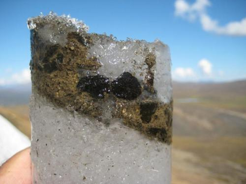 An ice core containing ancient caribou feces. For thousands of years, caribou gathered on ice patches to escape summer heat and insects. The caribou feces, which contain caribou DNA, digested plants, and viruses, were frozen within layers of ice, enabling researchers to detect the genomes of ancient viruses. Photo credit goes to: Brian Moorman