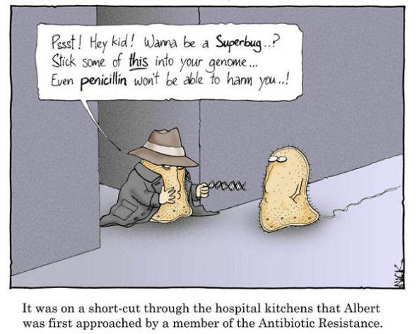 Best Antibiotic For Dog Bite