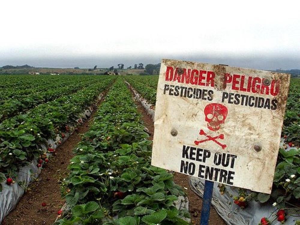 DangerPesticides