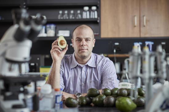 Avocados and leukemia