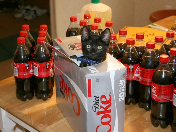 diet coke cat
