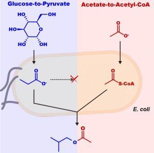 synthetic biology UC Davis