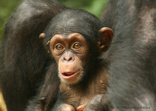 How long have primates been infected with viruses related to HIV?