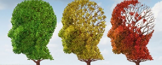 Cells from human umbilical cord blood improve cognition in Alzheimer's disease model mice
