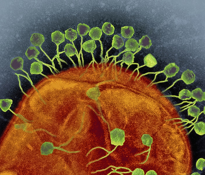 Bacteriophages attacking bacteria, TEM