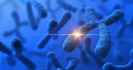 Genetic analysis supports prediction that spontaneous rare mutations cause half of autism