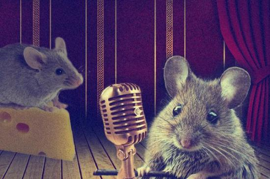 Female mice sing for sex Researcher finds female mice sing during courtship