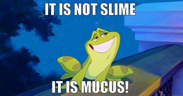 Mucus -- the first line of defense