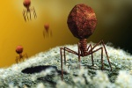 The world's smallest terrorist: Virus hijacks protein machine and then kills the host