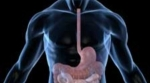 The neurons in our gut help the immune system keep inflammation in check