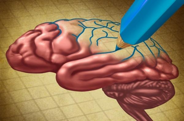 neuroplasticity or the plastic brain