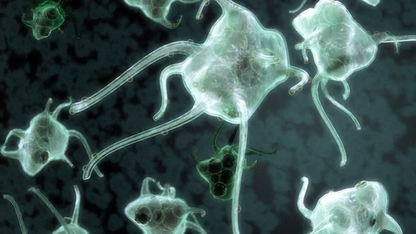 Immune system macrophage