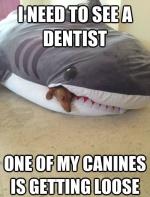 Dentist shark