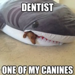 Dentist shark