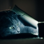 netflix cat