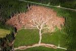 tree deforistation
