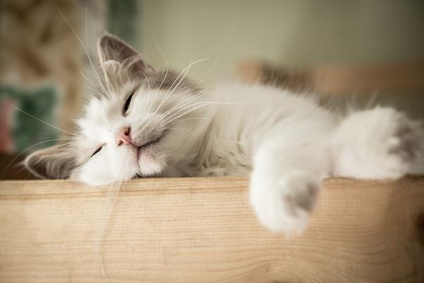 cat asleep