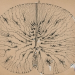 Spinal cord section by Ramon y Cajal, a Spanish neuroscientist
