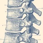 vertebrae of the spine