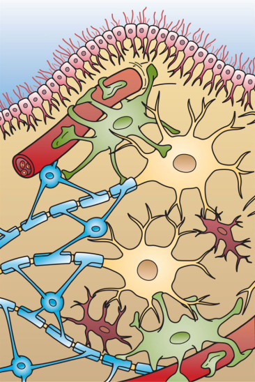 Glial cell types