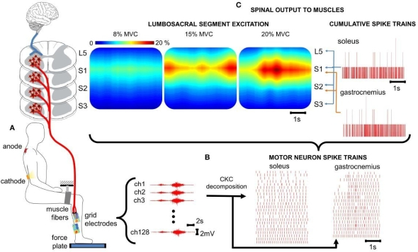 Figure 1 from the paper showing EMG recordings and the transformation using deconvolution to motor neuron spike trains